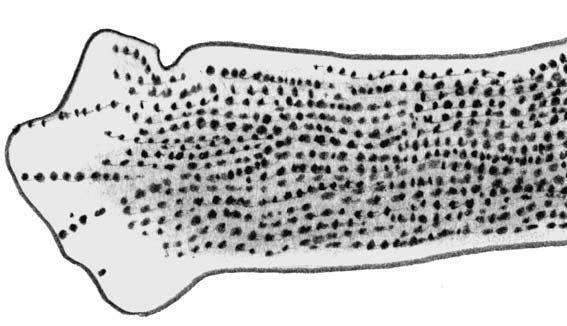Для микозов характерны поражения